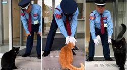 Οι δύο επίμονες γάτες που προσπαθούν εδώ και δύο χρόνια να μπούν σε ένα Μουσείο - και το έκαναν