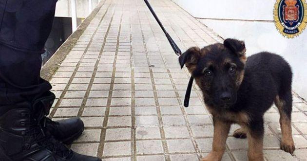 Polizei rettete misshandelten Welpen, nun kämpft der Hund gegen das