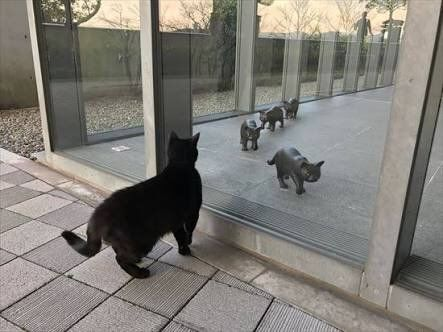 Eπίμονες γάτες προσπαθούν εδώ και 2 χρόνια να μπούν σε ένα Μουσείο - και το έκαναν