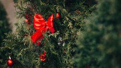 Αυτά τα Χριστούγεννα στολίζουμε «ζωντανό» δέντρο σε