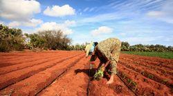 L'agriculture bio, nouvel Eldorado de l'économie