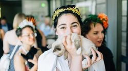 Couple Holds Wedding 'Kitten Hour' Instead Of Cocktail