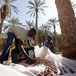 Ouargla: projet de plantation d'un million de