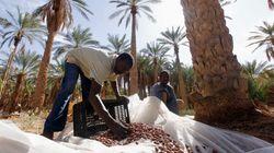 Ouargla: projet de plantation d'un million de