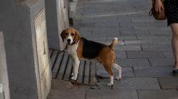 Hund wird an Fahrradständer festgebunden – so wehrt sich das Tier