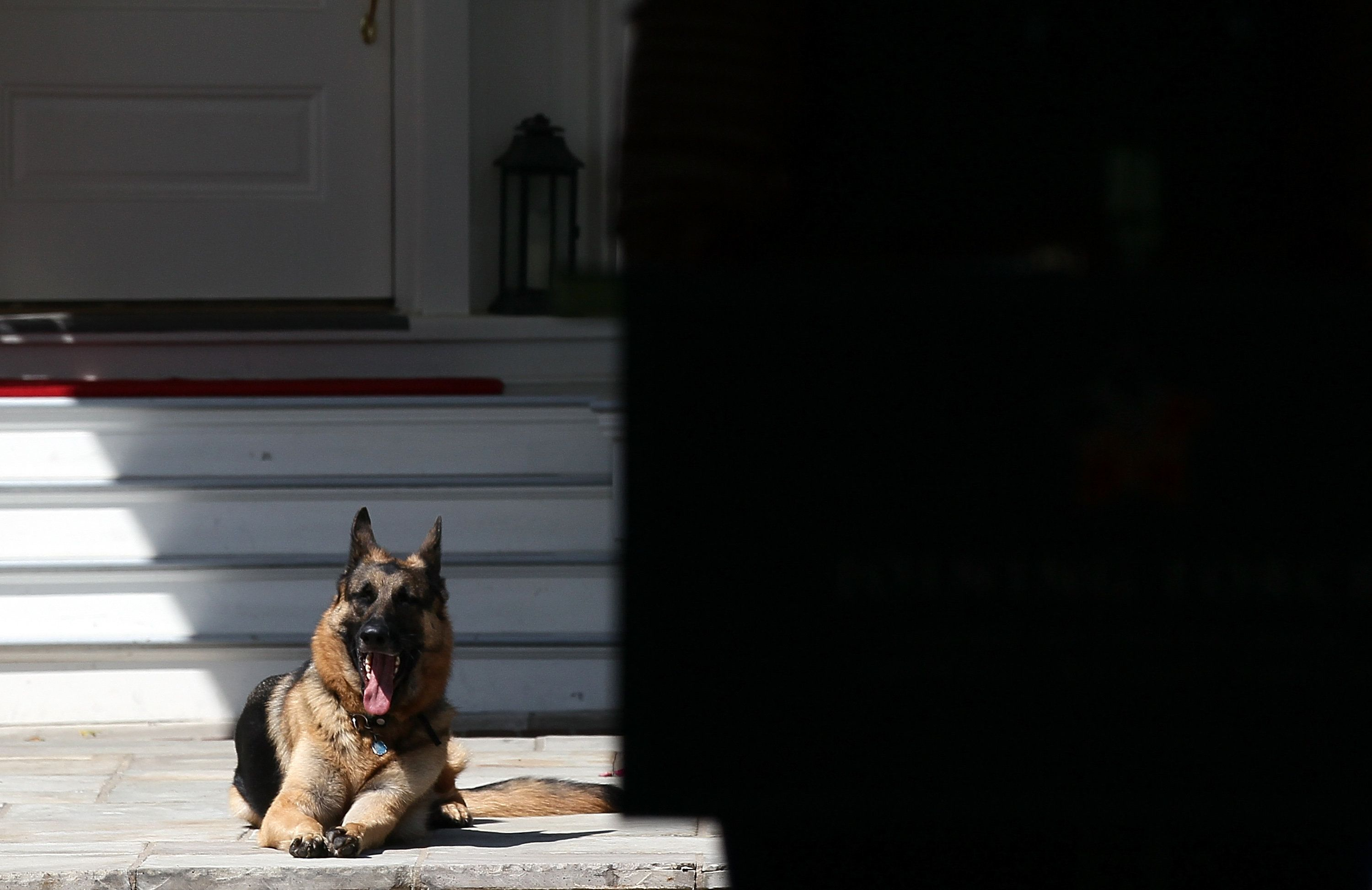 Champ, the Bidens' other German shepherd, at the Naval Observatory in 2012.