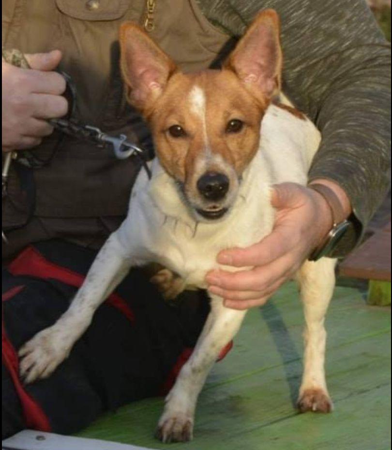 Süßer Hund wurde aus Tierheim gestohlen – so wurde er