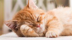 Ημέρα Υιοθεσίας Γάτας: Αυτό το βίντεο θα σας κάνει σίγουρα να