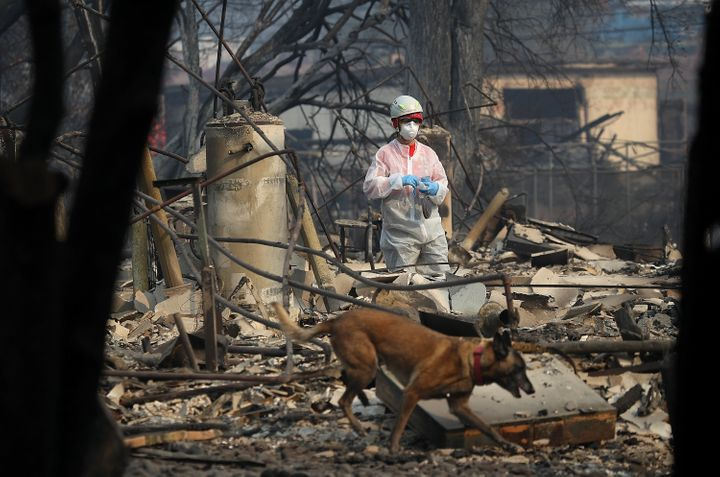 A rescue worker and her cadaver dog search the Paradise Gardens apartments for victims of the Camp Fire on November 16, 2018