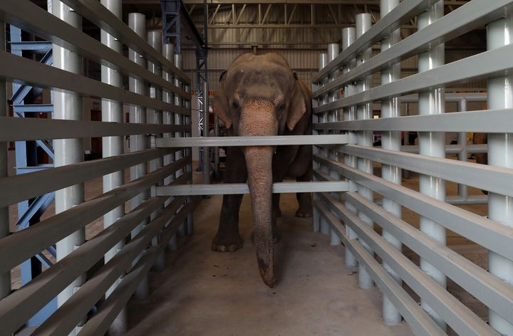 This female elephant, Maya, is seen inside one of the hospital's enclosures.