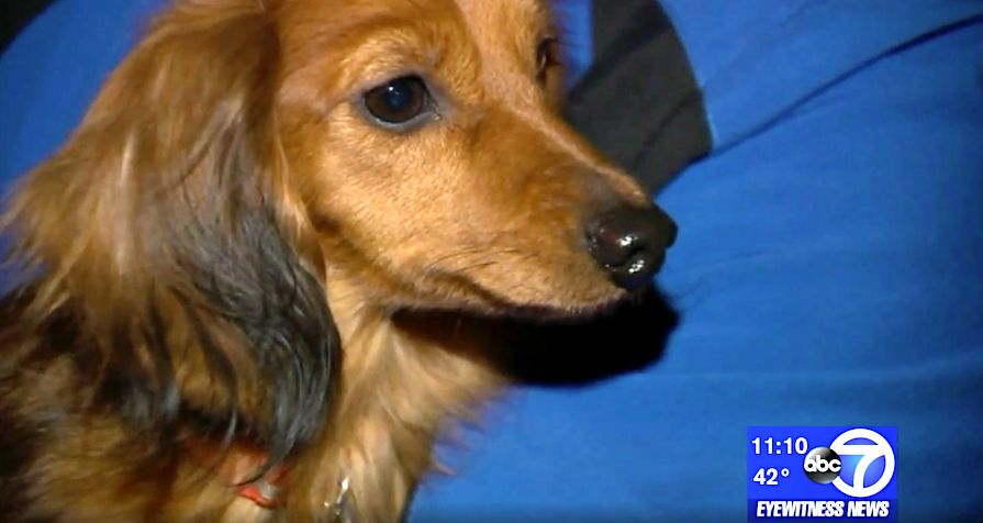 Dog rescued from pipe in New Jersey
