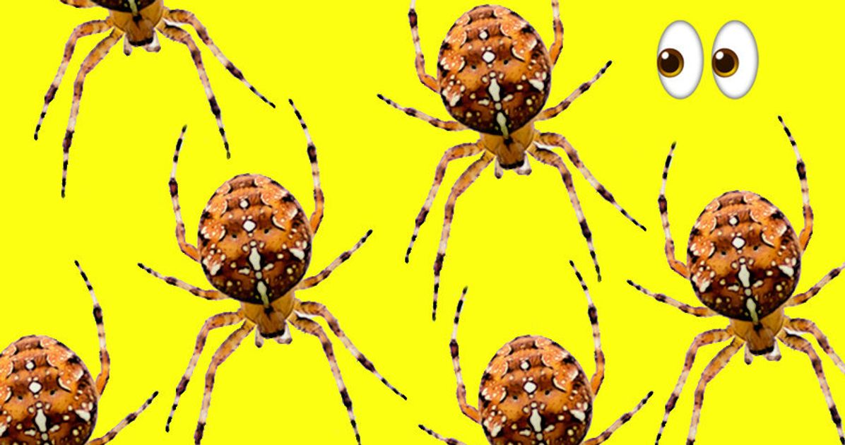 Spiders Seem To Be Getting More >> Seeing More Spiders Than Usual Study Suggests They Are No Longer