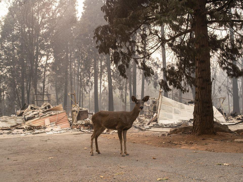 Die Natur holt sich zurück, was das Feuer zerstört hat.