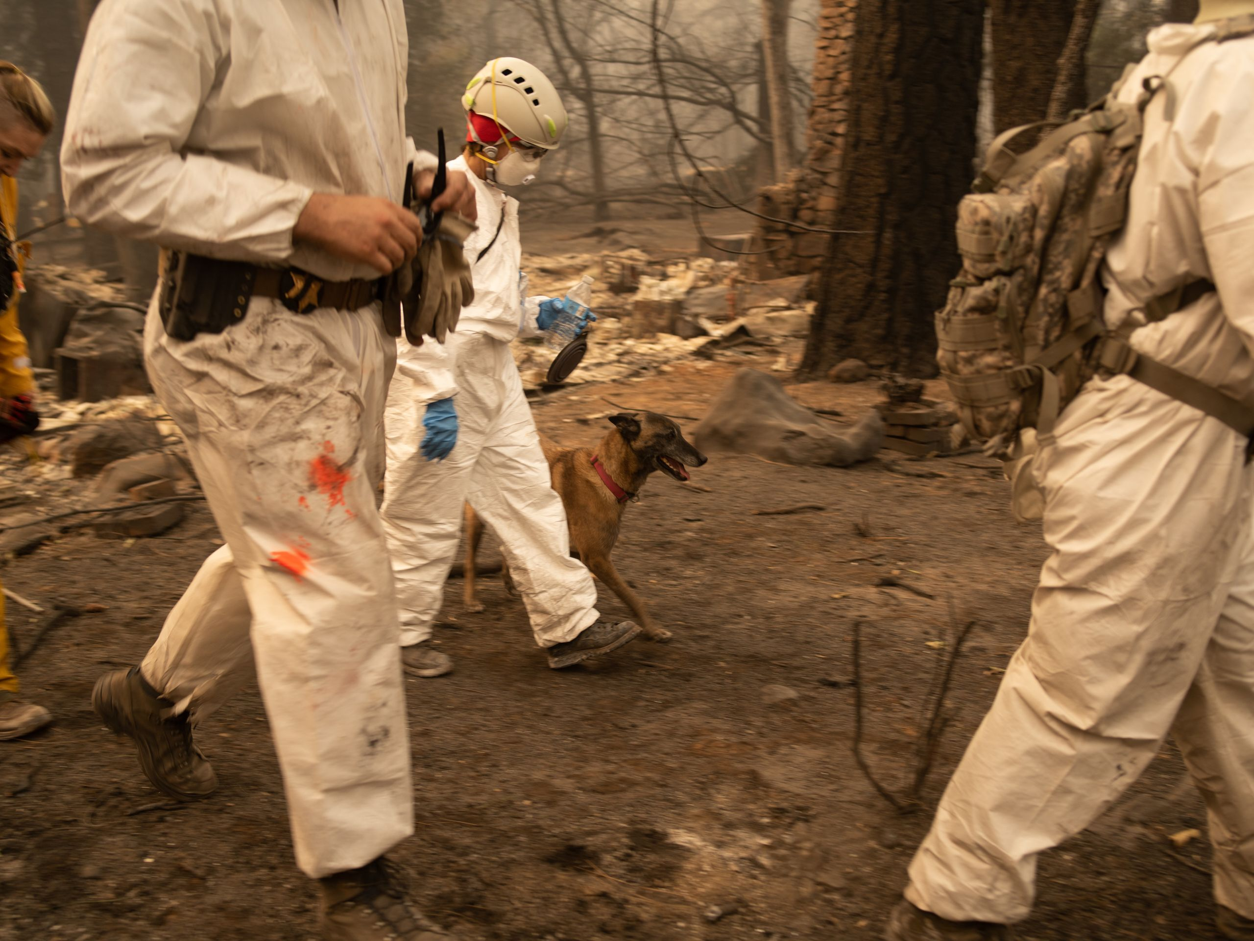 Eris, a dog from the Butte County Sheriff's Search & Rescue K9 Unit walks with handlers through a devastated home Paradis