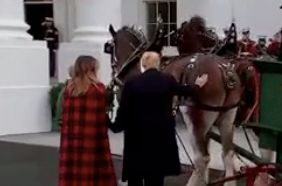 Trump Strokes A Horse's Rear End And The Jokes Just Write