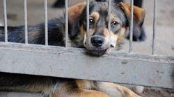 Polizei rettet 34 verwahrloste Hunde aus dem Haus eines illegalen