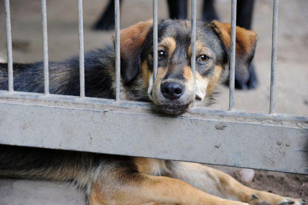 34 Tiere sind in einem desolaten Zustand gefunden worden.