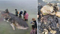 Toter Wal vor Indonesiens Küste: Umweltschützer sind entsetzt, was sie in seinem Magen