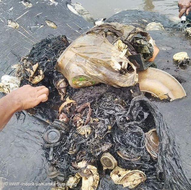 향고래 뱃속에서 나온 다양한 종류의 플라스틱
