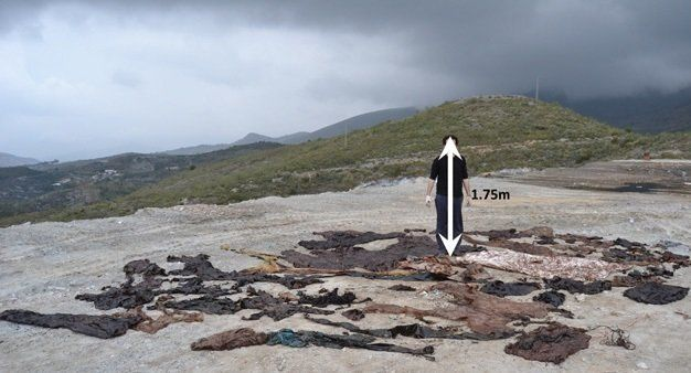 2012년 지중해 해안에 좌초한 향고래 뱃속에서 나온 비닐하우스 폐기물. 스테파니스 외 (2013) '해양오염 회보'
