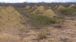 «Πυραμίδες» τερμιτών στη Βραζιλία έχουν ηλικία 4.000 ετών και φαίνονται από το