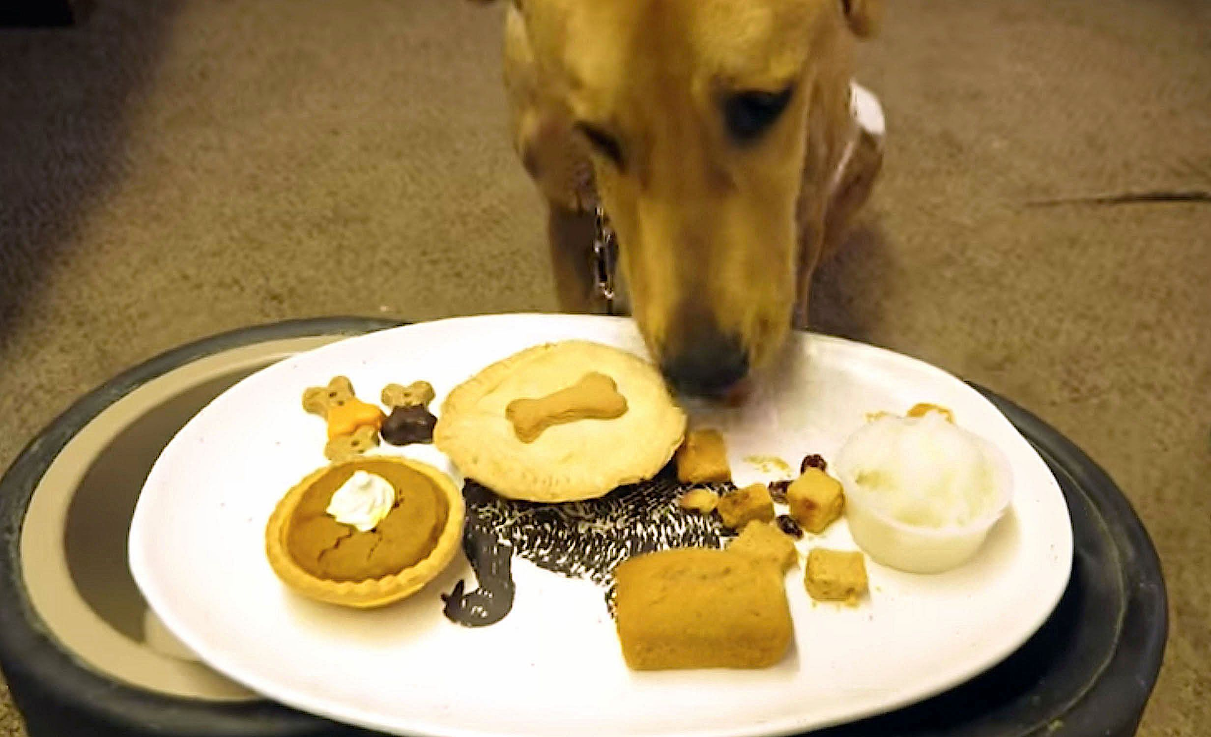 Some animal shelters provide special Thanksgiving dinners for their resident dogs.