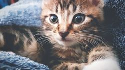 Abandoned Kittens Who Found Their Forever Home And 4 Other Adorable Cats This