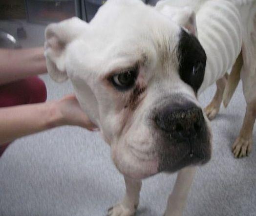 Tierschützer entdecken Hund auf der Straße: So etwas haben sie noch nie