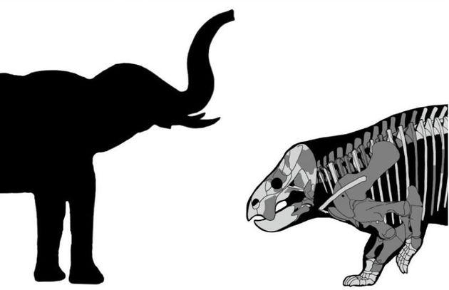 Επιστήμονες ανακάλυψαν τα οστά τεράστιου θηλαστικού που ζούσε την ίδια περίοδο με τους