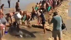 Δείτε πως δεκάδες λουόμενοι κατάφεραν να σώσουν έναν καρχαρία, με κίνδυνο της ζωής