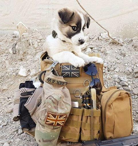 Η συγκινητική ιστορία ενός στρατιώτη: Επανενώθηκε με το κουτάβι που είχε σώσει στη
