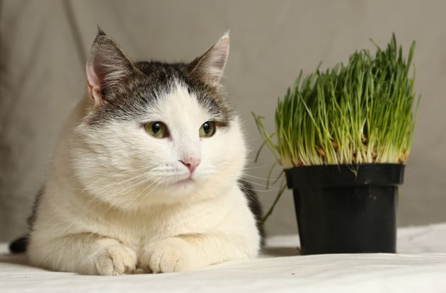 고양이에게 채식을?