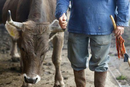 Ελβετία: Οι πολίτες είπαν «όχι» στις «αγελάδες με