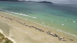 Πάνω από 140 φάλαινες ξεβράστηκαν νεκρές σε ακτή της Νέας