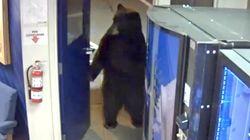 Als würde er dort arbeiten: Video zeigt Bären, wie er Polizei-Station