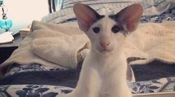 Μία γάτα...επιστημονικής φαντασίας έχει συγκινήσει το