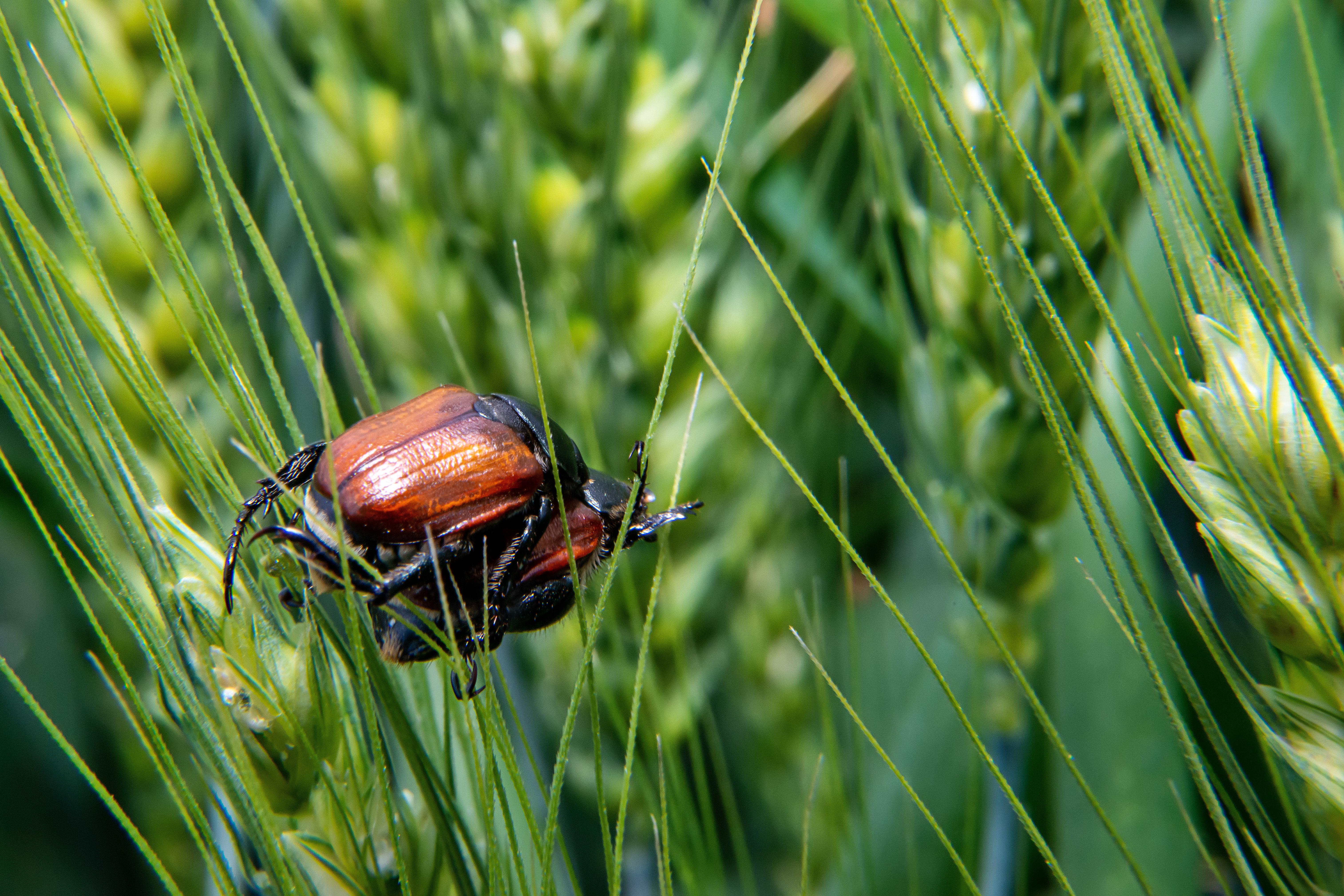 Le réchauffement climatique rendrait les insectes