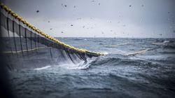 Το σχέδιο της Νορβηγίας να τροφοδοτεί τα κρουαζιερόπλοια της με καύσιμα από νεκρά