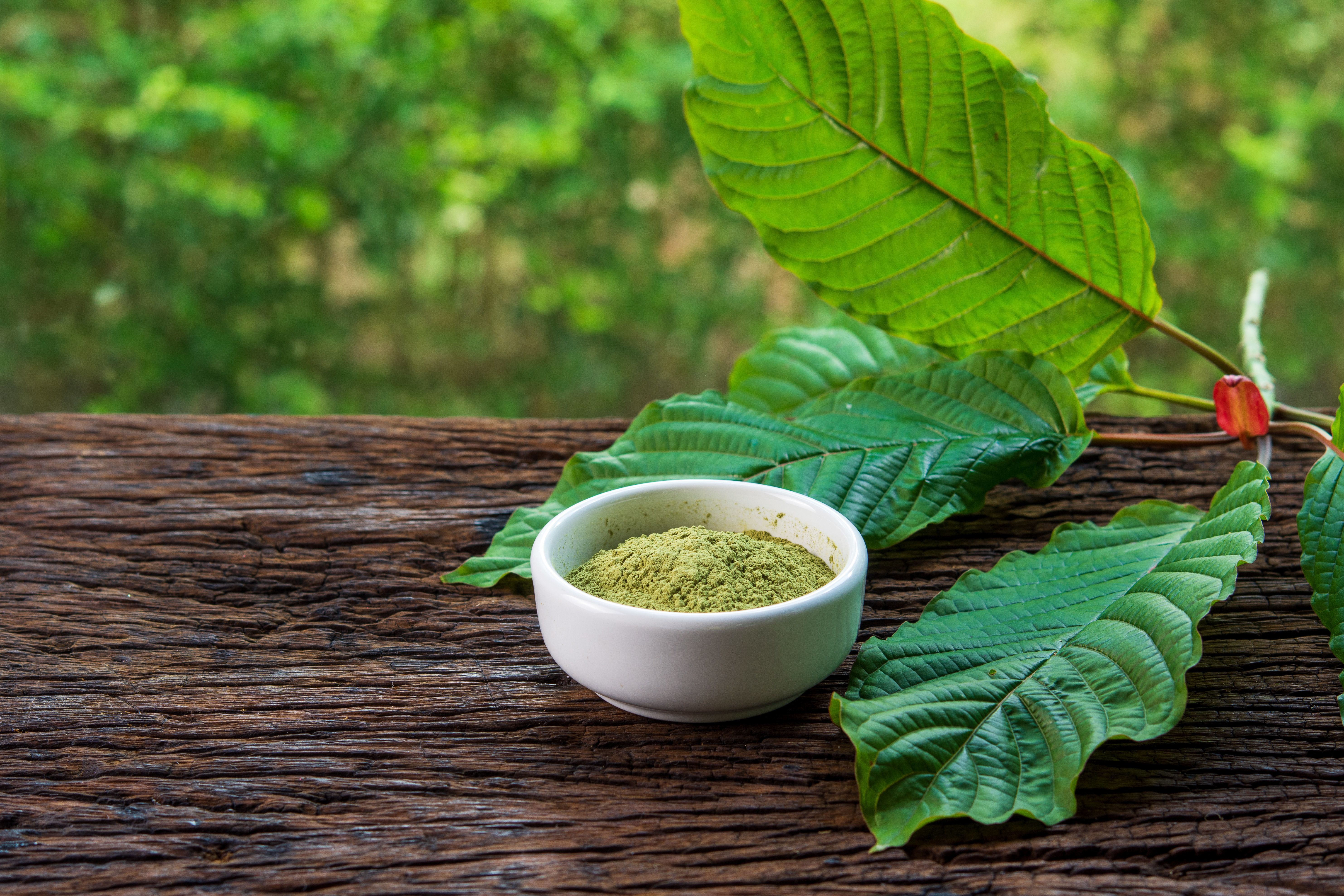 The kratom powder comes from the leaves of a Southeast Asian tree of the coffee family. At least 11 kratom shops in the center