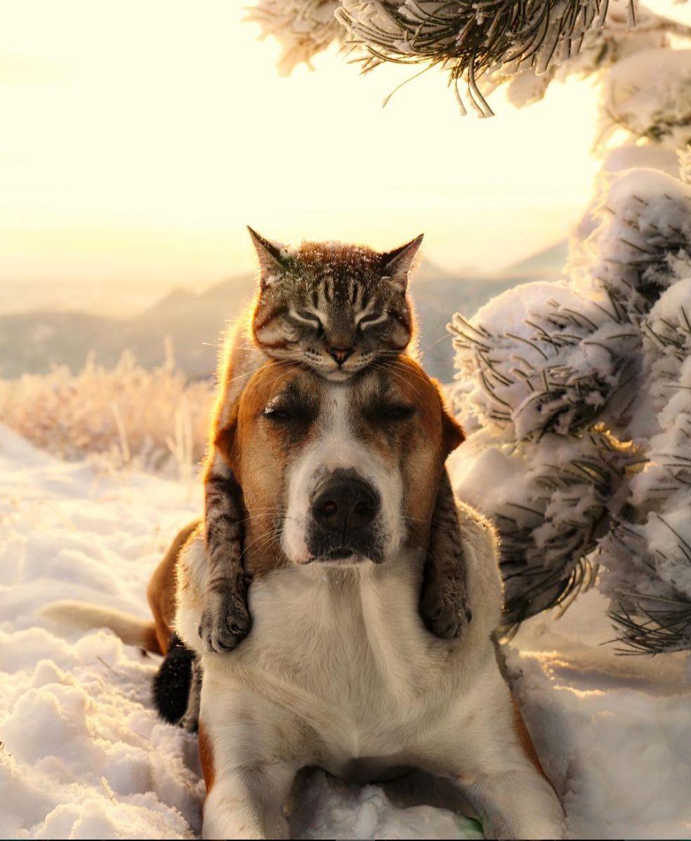 Conheça o gato e o cachorro resgatados que se tornaram companheiros