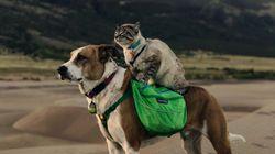 Baloo e Henry: O gato e o cachorro resgatados que se tornaram companheiros