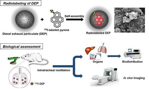 미세먼지 표준물질의 체내 영상화 연구