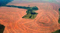 Η καταστροφή του δάσους του Αμαζονίου - Σε ένα χρόνο χάθηκε έκταση ίση με 1εκατ. γήπεδα ποδοσφαίρου