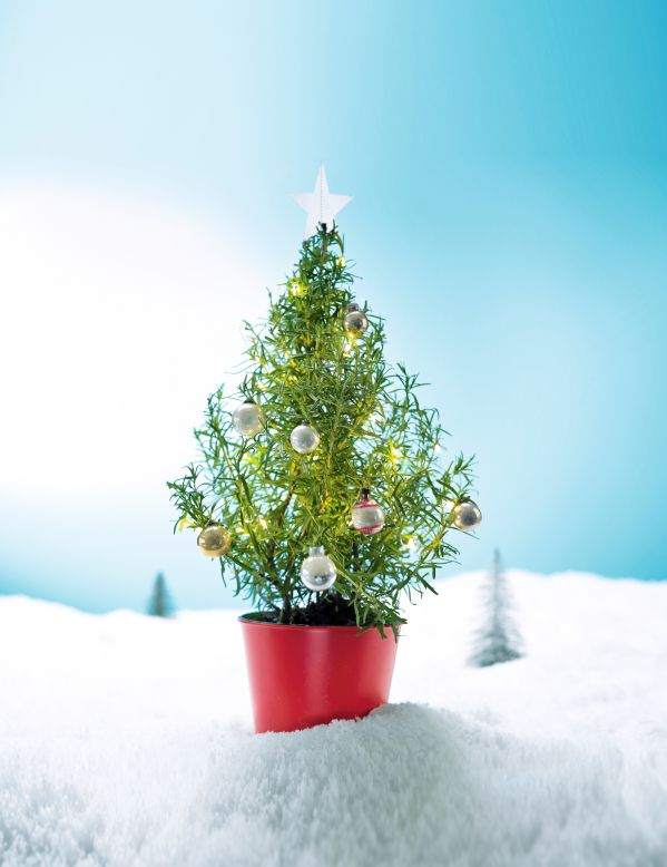 You Can Now Buy An Edible Rosemary Christmas Tree At