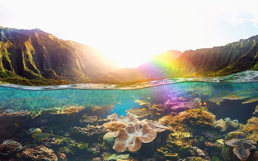 """In a landmark move expected to ripple across an increasingly eco-conscious world, Hawaii has become the first state in the US to ban certain suntan lotions in an effort to protect its coral reefs from further chemical damage. The legislative bill, signed by Hawaii Governor David Ige last week, prohibits the sale of sun cream that contains chemicals oxybenzone and octinoxate, thought to cover as many as 80 per cent of brands. Tourists heading out to the sunny Pacific archipelago in the near future are advised to shop responsibly, but the law isn't due to take effect until January 1, 2021. A sunscreen display in Hawaii Credit: Hawaii """"We are blessed in Hawaii to be home to some of the most beautiful resources on the planet,"""" Ige said at the signing of the bill. """"But our environment is fragile and our own interaction with the earth can have everlasting impacts. This bill is a small first step worldwise to really caring about out corals and our reefs in a way that no one else anywhere in the world has done."""" How do the chemicals damage coral? About 25 per cent cent of sun screen is washed off a human's skin within 20 minutes of being in the water. According to the US National Park Service, this amounts to 6,000 tonnes of sunscreen poured into the coral reefs around the world each year - with Hawaiian reefs hit particularly hard. Research has found that just one drop of oxybenzone in six-and-a-half swimming pools of water is potent enough to cause bleaching, starvation, DNA damage and reproductive problems in coral reefs. The UV-resistant chemical found in around 3,500 sun creams infects zooxanthellae (one of two algae central to the reef's survival) and thwarts the development of baby coral. Hawaii boasts impressive coral Credit: Getty """"Oxybenzone is really toxic to the juvenile form of corals and consistent with the dogma of toxicology that juveniles are usually a thousand time more sensitive to the toxic effects of a chemical than a parent,"""" said Craig Downs, a forens"""