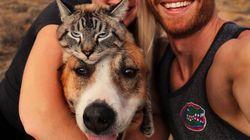 '개와 고양이는 앙숙'이 편견임을 증명한 이 가족의