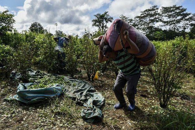 En Colombie, le narcotrafic a pris l'accent