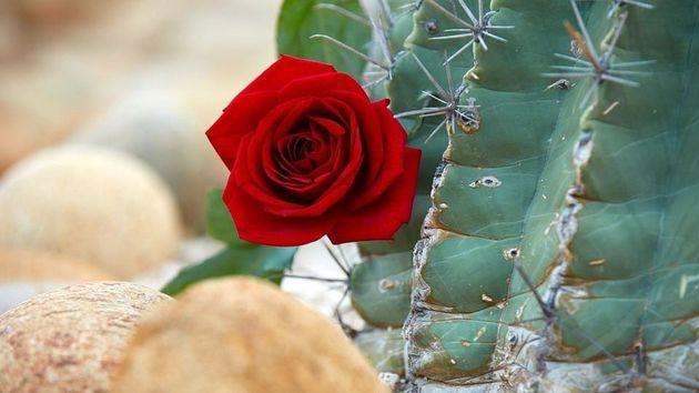 Die Rosen werden im kommenden Jahr in Mexiko vergeben.