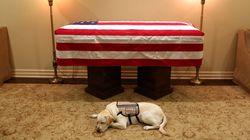 Ωδή στο σκύλο που πενθεί: Ο Σάλι και ο