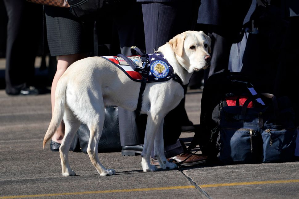 Sully the service dog.